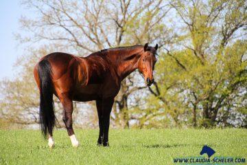 Eilmeldung! Koppelhaltung für Pferde ist seit dem 01. Mai