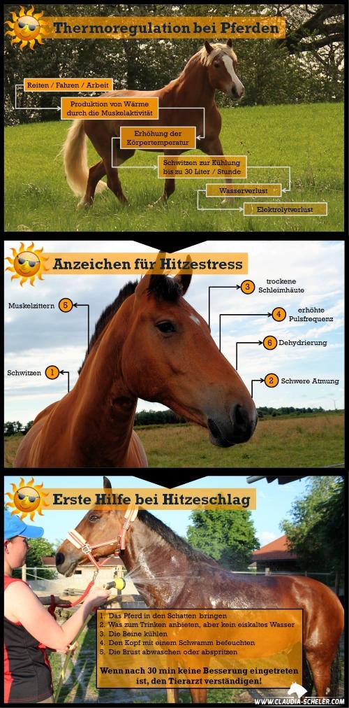 Pferde_Hitze