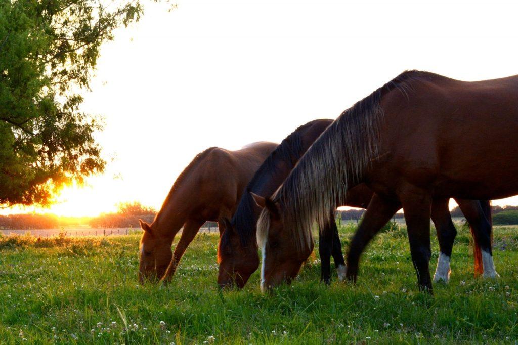 horses-2536540_1920